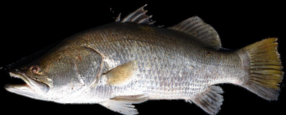 Kalastus: enemmän kuin harrastus
